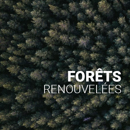 forets renouvelees